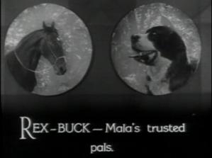 Rex_Buck