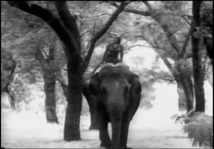 PG.elephant