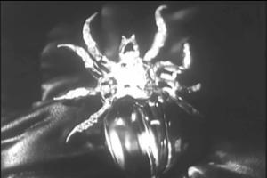 CA44.scarab