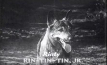 ARR.rinty